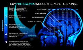 Tease Blue Pheromone, BDSM KITs,Gspotkenya sex tablets