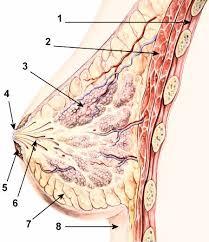 Sustafix reviews,Breast Enlargement Pumps